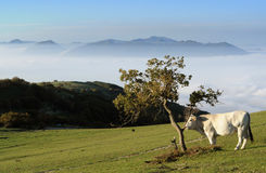 Mountain pasture Stock Photos