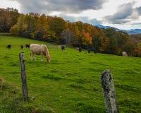Mountain Pasture Stock Photography