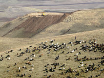 Mountain pasture. Pasture for cattle in Javanese pass on the road from Dushanbe to the javana Tajikistan Royalty Free Stock Images