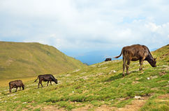 Mountain pasture Stock Image