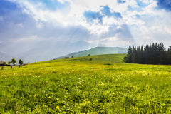 Mountain pasture in the early morning Royalty Free Stock Photo