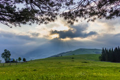 Mountain pasture in the early morning Royalty Free Stock Images