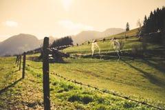 Mountain pasture Stock Image