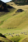 The mountain, pasture and a flock of sheep Stock Photography