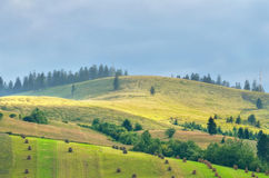 Mountain pasture Stock Photography