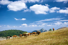 Mountain pasture with horses Royalty Free Stock Photos
