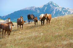 Mountain pasture with horses Stock Image