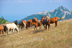 Mountain pasture with horses Royalty Free Stock Images