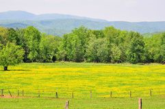 Mountain Pasture Land. Meadow at Cades Cove Tennessee with the Smoky Mountains as a backdrop Stock Photography
