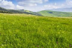 Mountain pasture in the morning Stock Photo