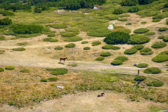 Mountain pasture. In the mountains of Bulgaria. View from the top of the mountain Stock Photo