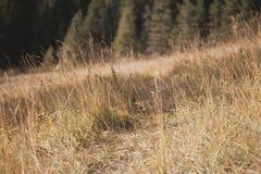 Mountain pasture Stock Photo