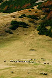 Mountain pasture with sheep Stock Photos