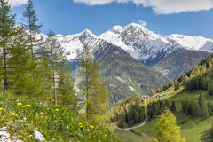 Mountain pasture and snow-capped mountains Stock Images