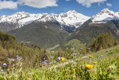 Mountain pasture and snow-capped mountains Stock Photos