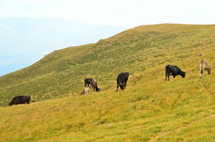 Mountain pasture Royalty Free Stock Photography