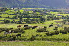 Mountain pasture, UK, England Royalty Free Stock Photography