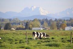Mountain Pastureland Stock Photo