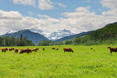 Mountain Pastures Stock Photo