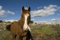 On the mountain pastures Stock Photo