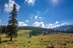 Mountain pastures Stock Photos