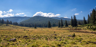Mountain pastures Stock Images