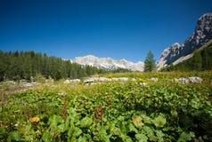 Mountain pastures Stock Photography
