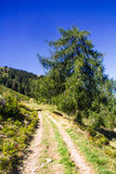 Mountain path Royalty Free Stock Image