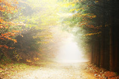 Mountain path in autumn colours Royalty Free Stock Image