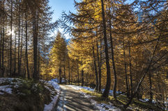 Mountain path in autumn season, Alpe Devero Royalty Free Stock Images