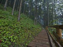 On a Mountain Path. On the mountain path on a foggy day royalty free stock photo