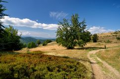 Mountain path. Hiking trail running through meadow to the top of the mountain stock photography