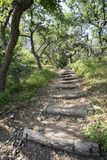 Mountain path on the hillside in  woods. Stock Image