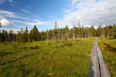 Mountain Path In Krkonose Stock Photography