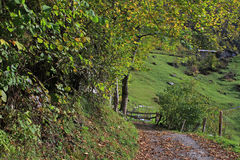 Mountain path in Lauterbrunnen valley in autumn surrounded by trees and plants. Mountain path from Stechelberg to the end of the Lauterbrunnen valley. Surrounded royalty free stock image
