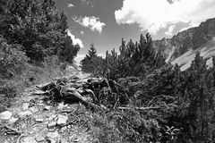 Mountain path in the mountains Stock Images