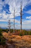 Mountain path. A pleasant mountain trail that runs to the valley royalty free stock images