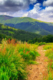 Mountain path in the tall grass. Path in the tall grass going through the forest to the mountains Royalty Free Stock Photography