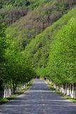 Mountain path with trees on both sides stock photography