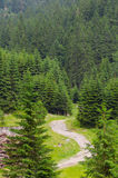 Mountain path way throw fir forest in Romanian Carpatians. Mountain path way throw fir forest in Romanian Carpatian mountains stock photography
