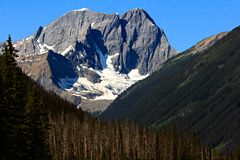 Mountain Peak through the Evergreen Forest Stock Photos