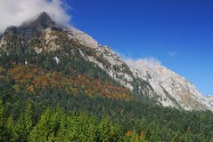 Mountain peak and forest. In autumn Stock Images