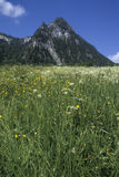 Mountain peak and green meadow Stock Images