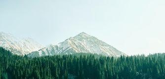 Mountain peak with pine forest color toning Stock Images