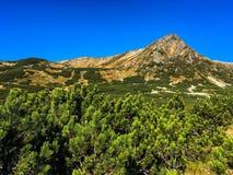Mountain peak among pines stock photography