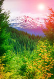 Mountain peak with snow and autumn trees. Fantastic evening glowing by sunlight Stock Photo