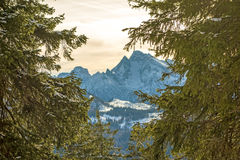 Mountain peak through trees Stock Photography