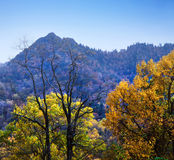 Chimney Tops Stock Images