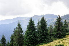 Mountain peaks, coniferous forest and green meadow Stock Photography