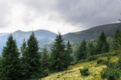 Mountain peaks, coniferous forest and green meadow Royalty Free Stock Photos